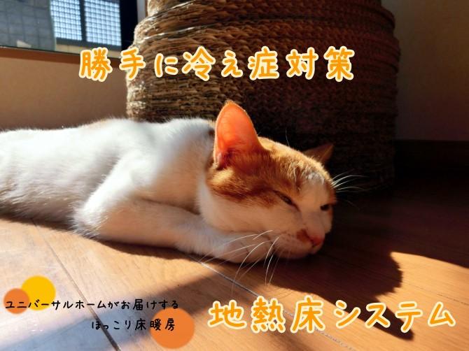 勝手に冷え症対策画像サンプル (1)_04
