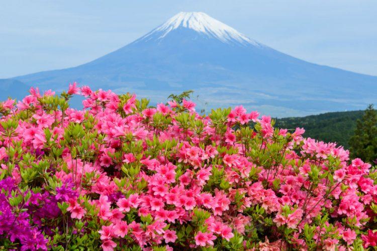 宿場町として栄えた街!静岡県三島市の住みやすさを徹底解剖!