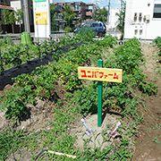 新潟西店名物ユニバファームです。耕作の時期はお客様とともに美味しい野菜作りをしています。
