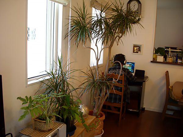 テレビ回りはご主人様の趣味で観葉植物を置き、癒し感たっぷりです。