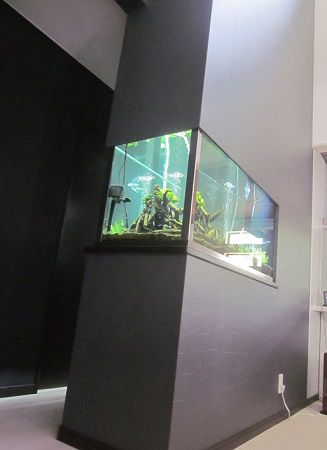ご主人の夢でもあった 『大きな水槽』。夢がかなって良かったですね。水槽のお魚を見ながらの生活、癒されそうねすね。