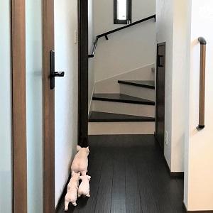 玄関ホールにはラッキーモチーフの豚さんの飾りが♪