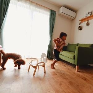よーい!ドンッ!お子様とワンちゃんが仲睦まじくリビングで遊んでいます。